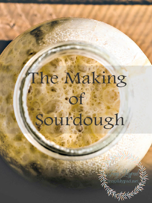 The Making of Sourdough