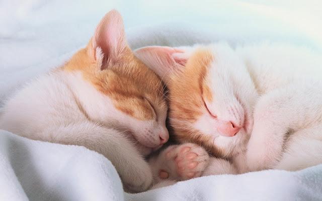 Twee katten in dromeland