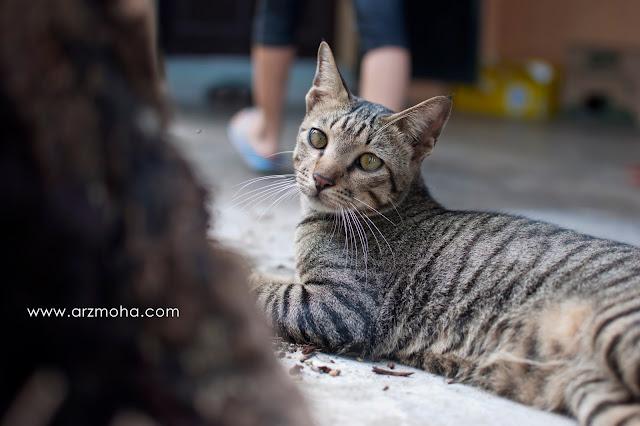 gambar anak kucing, anak kucing comel, anak kucing yang hilang, kucing comel hilang, gambar kucing cantik,
