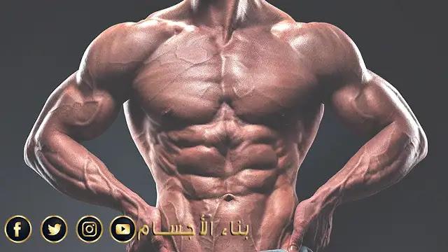 خطوات للتكبير حجم عضلاتك