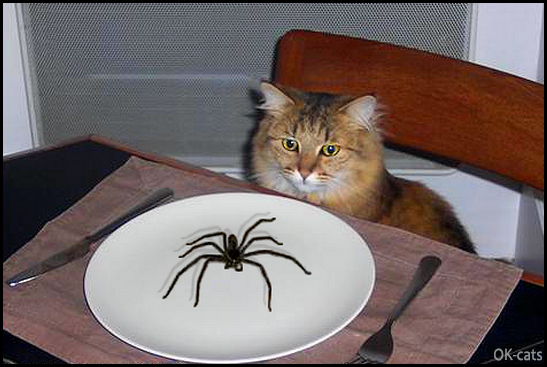 Photoshopped Cat picture • Hungry kitty does not want to eat a giant spider. You know that I'm vegan!