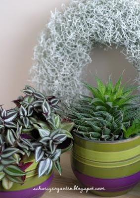 Ein Schweizer Garten Zimmerpflanzen Das Grun Des Winters