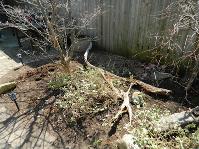Parkdale Spring Garden Cleanup After by Paul Jung Gardening Services a Toronto Gardening Company
