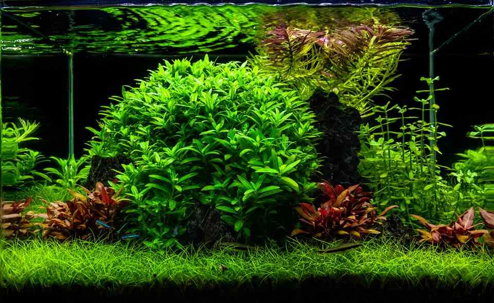 Top 5 Beautiful Aquascaping Styles For Home Aquariums