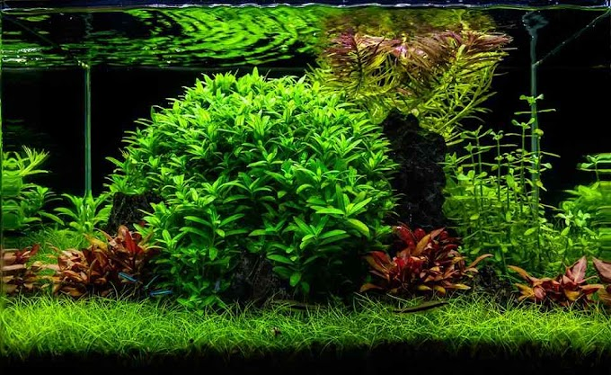 Top 7 Beautiful Aquascaping Styles For Home Aquariums