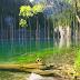 [4 Foto] Jom Lihat Fenomena Keajaiban Alam Hutan Tumbuh Dalam Air