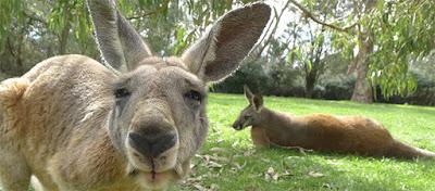 australia tourist visa form