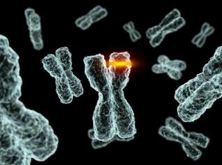 Contoh Dampak atau Akibat-Akibat Menguntungkan dan Juga Merugikan Dari Terjadinya Mutasi Gen
