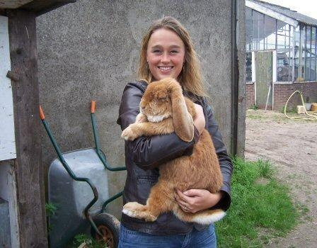 The French Lop Rabbit: The Largest Breed Of Rabbit With ...
