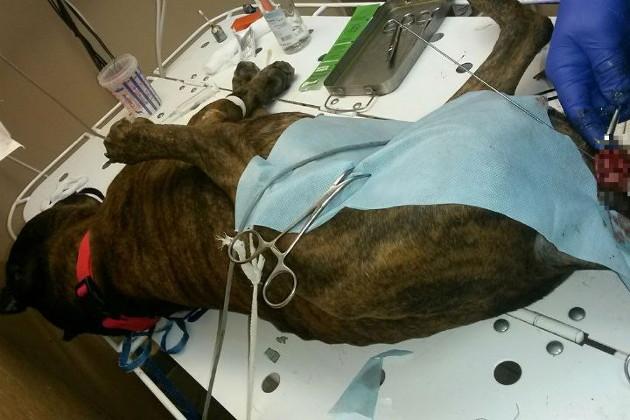 Настоящее животное: россияни 8 лет насиловал собаку и отделался штрафом (Фото)