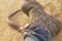 Heboh Video Ular Mematikan Menyelinap ke Dalam Celana