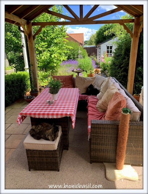 Hanging Out Under The Gazebo with Pandora and Parsley ©BionicBasil® The Pet Parade 362