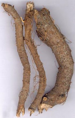 Cần phân biệt rễ củ gai và củ gai an thai