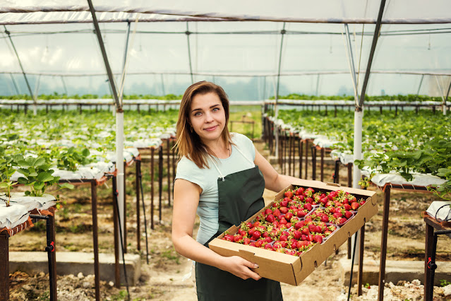 Strawberry Farming in India