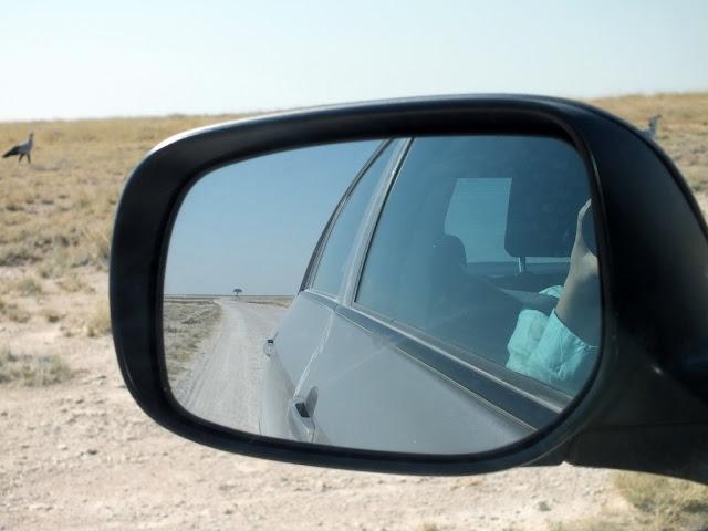 safari en coche por Etosha