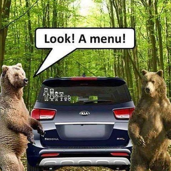 Funny Look A Menu Bears Picture