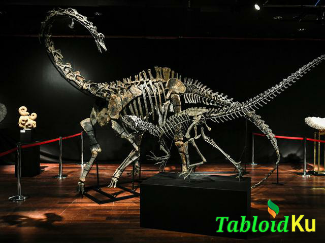 fosil dinosaurus- tabloidku.com