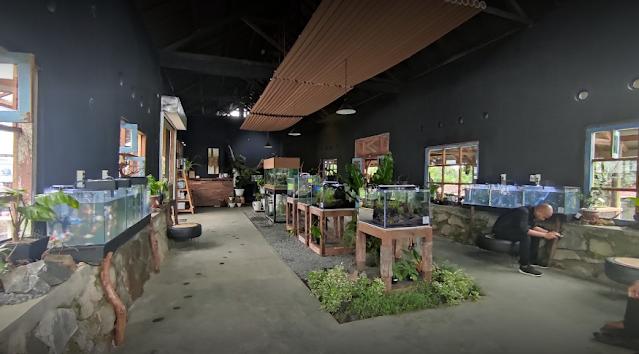 Pari Kuning Banyuwangi sentra agrobisnis pertanian