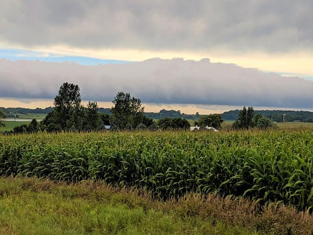 corn nitrogen management Minnesota wet weather climate