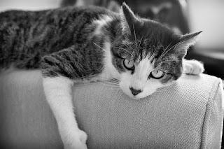 Gato en un mueble Problemas con orina de gato