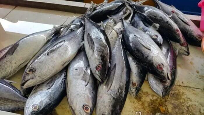 Harga Ikan Tuna Terbaru