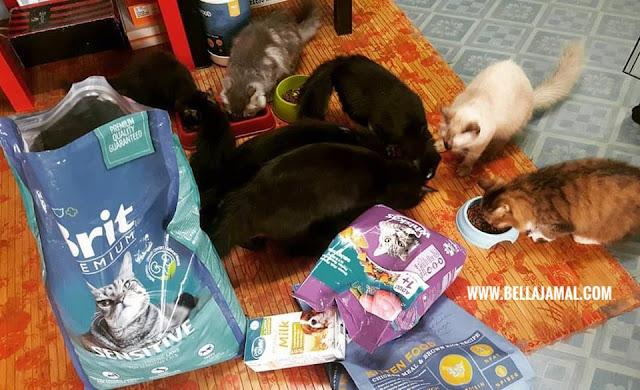 Tips Memilih Makanan Kucing Cat Food Ini Adalah Bellarina Natasya
