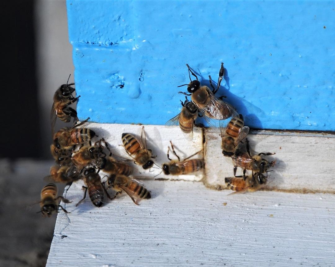 The Peace Bee Farmer 2019