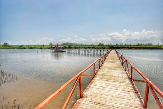 keindahan jembatan mangrove di pangandaran