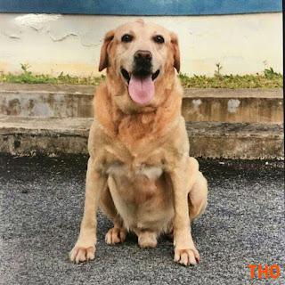 Anjing polis
