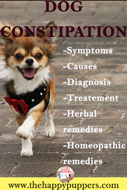 The complete guide to understanding dog constipation
