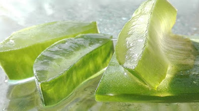 Aloe vera gel: Herbal moisturizer