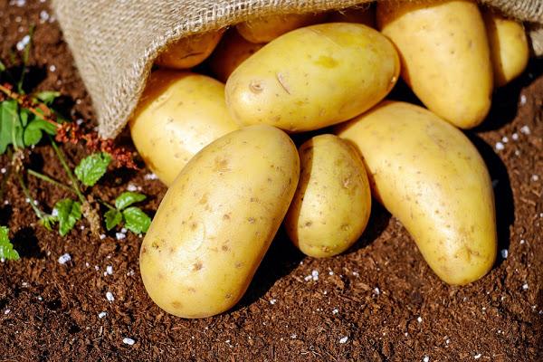 Ideas para cocinar con patatas: un producto sano y versátil