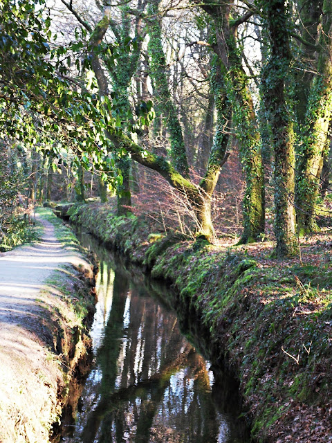 Leat at Luxulyan Valley, Cornwall