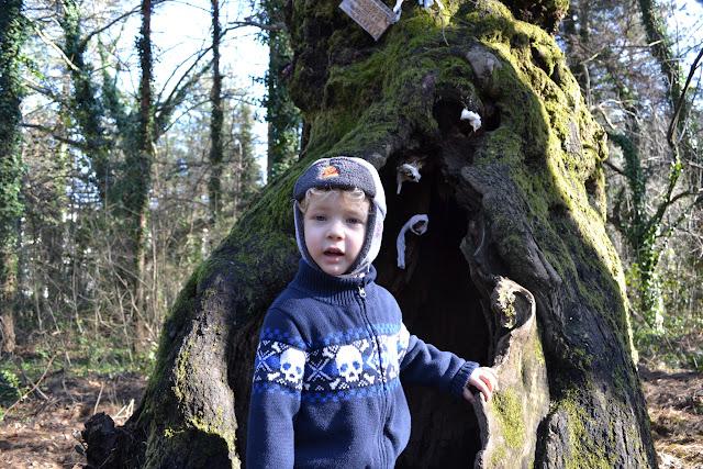 Yaşlı ağaçla birlikte, Güral Sapanca Wellness Park, Sapanca