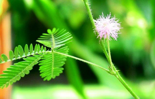 Macam-Macam Gerak Pada Tumbuhan dan Contohnya Lengkap