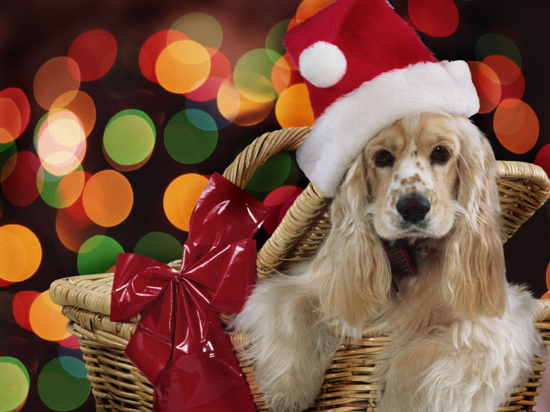 Animals Zoo Park: 5 Christmas Puppies Wallpapers