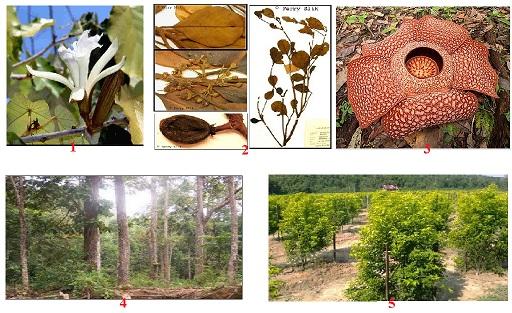 Mengenal Tumbuhan Langka di Indonesia