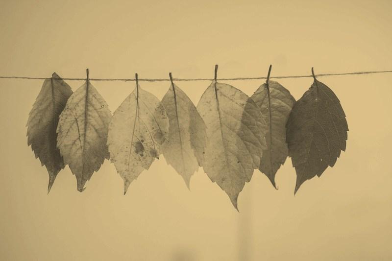 """Jesień składa się z dwóch części albo o """"Pożegnaniach"""" S. Dygata (Pikniki z Klasyką #31)"""
