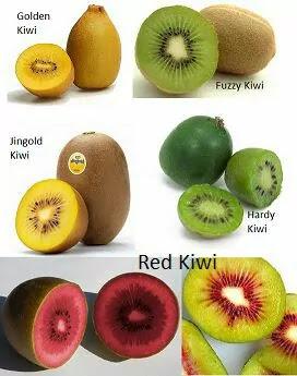 List of weight loss fruits, kiwi