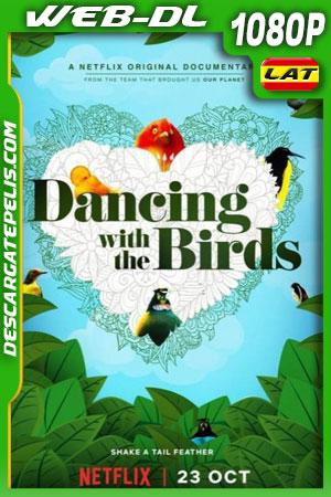 Bailando con los pájaros (2019) 1080p WEB-DL Latino – Castellano – Ingles