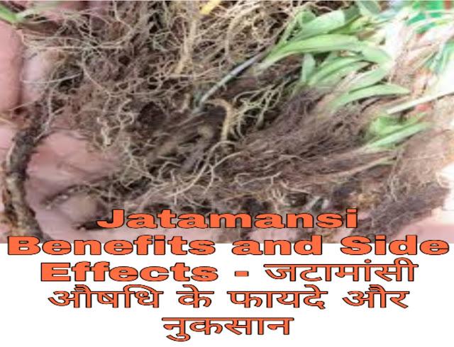 Jatamansi Benefits and Side Effects in Hindi - जटामांसी औषधि के फायदे और नुकसान