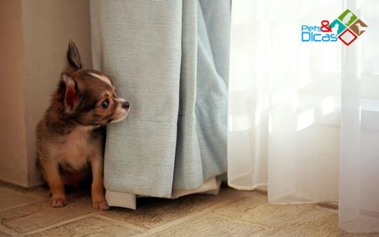 Como acalmar cachorro com medo de chuva