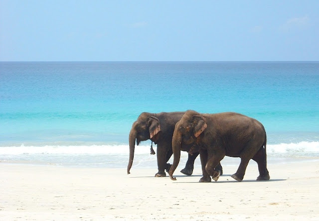 Elephant Beach, Best Places to visit in Andaman & Nicobar