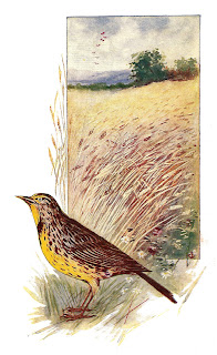 bird lark digital download illustration