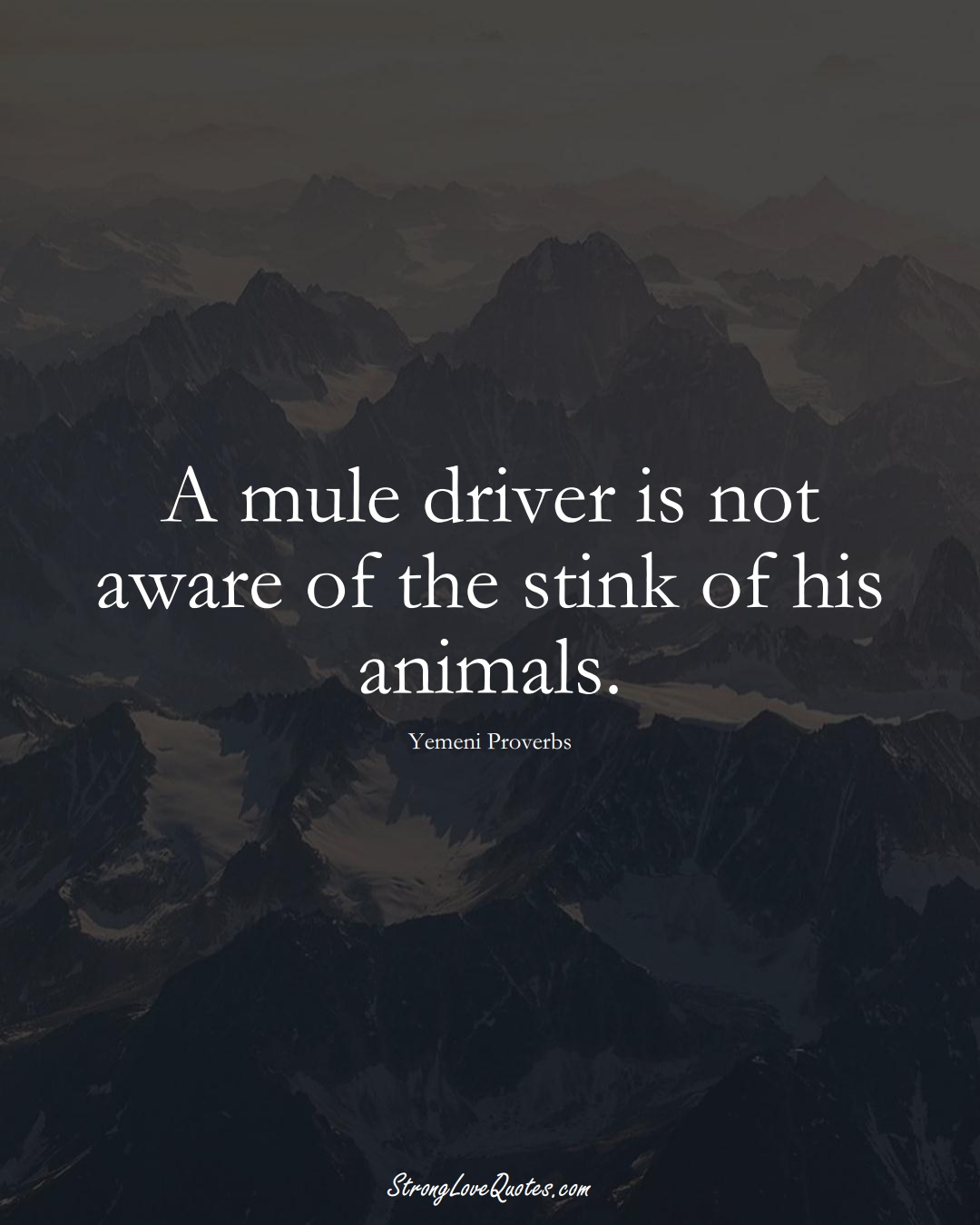 A mule driver is not aware of the stink of his animals. (Yemeni Sayings);  #MiddleEasternSayings