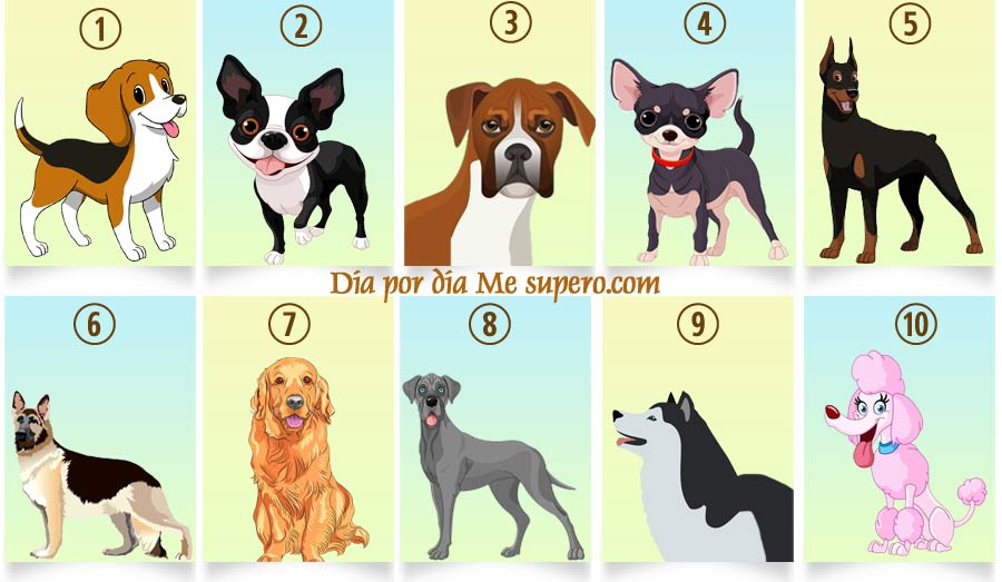 Test: Descubre qué revela tu raza de perro favorito