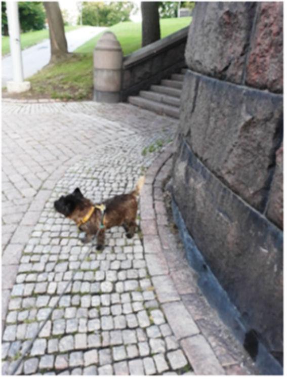 Elmo-koira kirkon portaiden edessä, mukulakivistä ladotulla katukäytävällä.