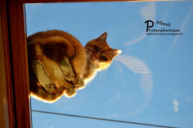 Katze Mimi sitzt auf dem Dach auf einem Fenster