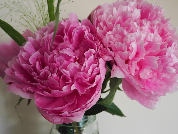 Snaps: My New Favourite Flowers
