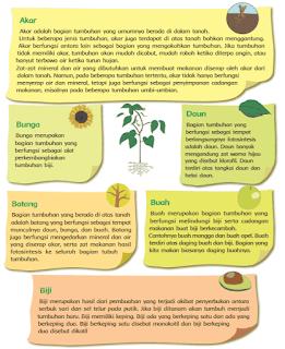 bagian-bagian tumbuhan www.simplenews.me